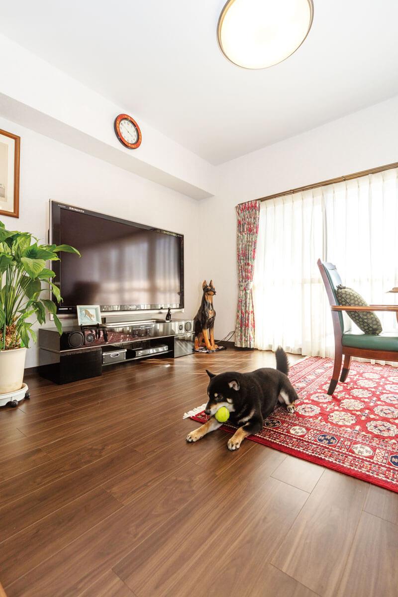 床はワンちゃんのために、滑りにくく、脚への負担が軽いワンラブフロアを採用。