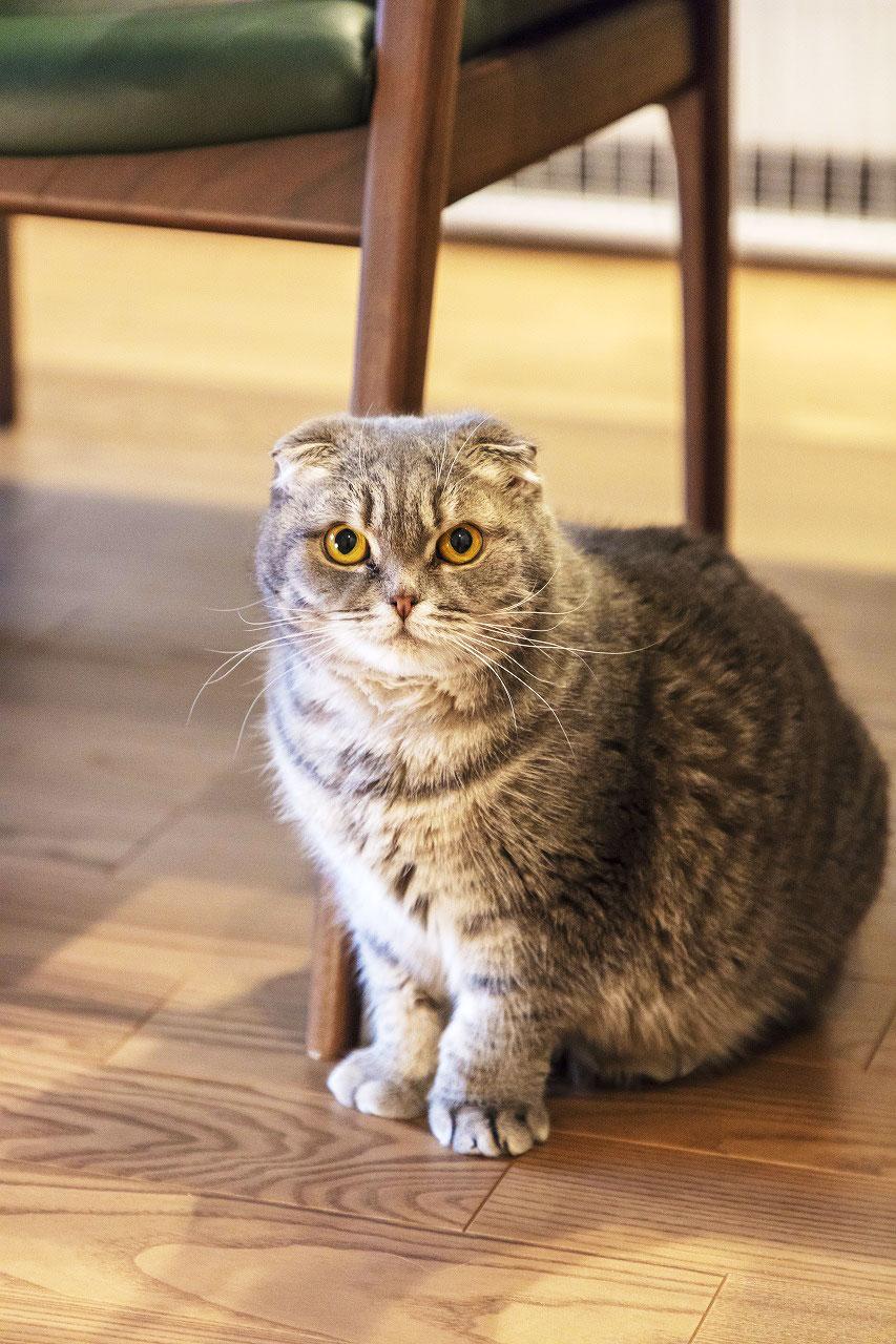 猫がいるため床材は傷や汚れが目立ちにくい硬いものを希望。
